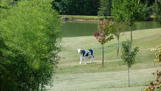 Les Valades: The Grass with cow