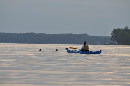Green Heron Bed and Breakfast : kayaking with the loons on Pokegama Lake