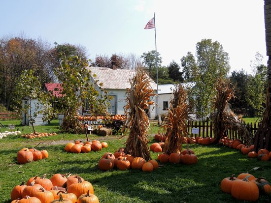 Richfield, OH: more pumpkins with some of the restored building in the background
