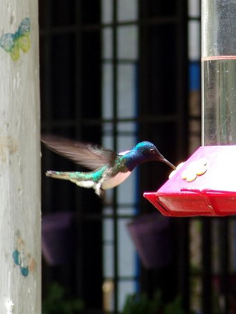 Adventure Farm and Nature Reserve: Humming Bird