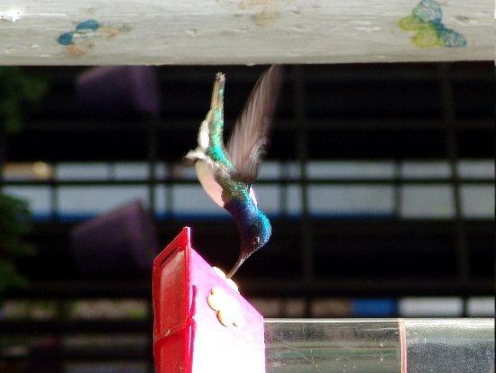 Adventure Farm and Nature Reserve: Humming Bird