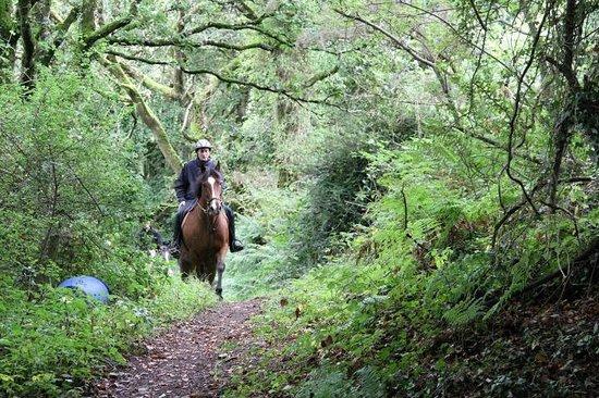 Hitchmough's Equestrian Centre