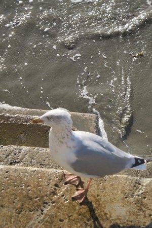 Sea Breeze Guest House: Gulls