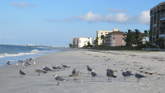 Bonita Beach Resort Motel: la playa
