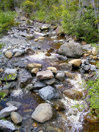 Woody Point, Kanada: Stream along the trail