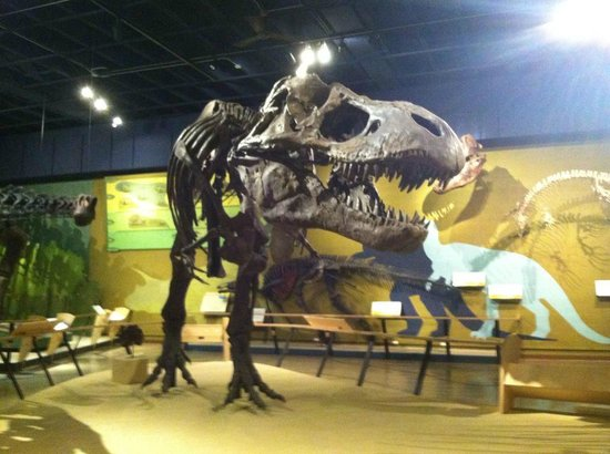 T rex picture of cleveland museum of natural history Dinosaur museum ohio
