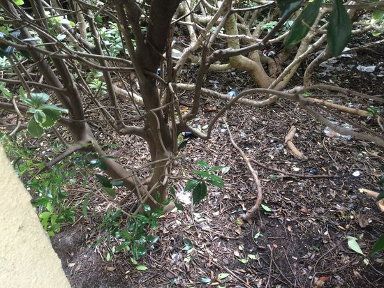 Red Roof Inn Wilmington: Trash outside the room in the bushes.....