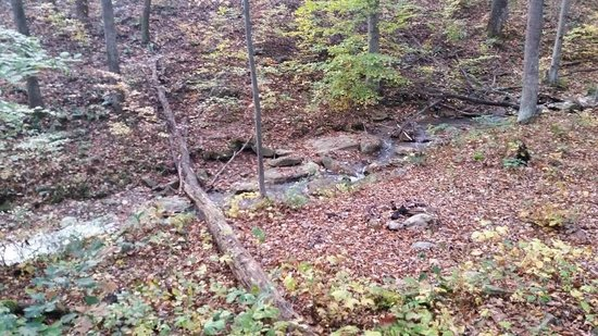 Mountain Creek Cabins : Maple Tree: stream behind cabin