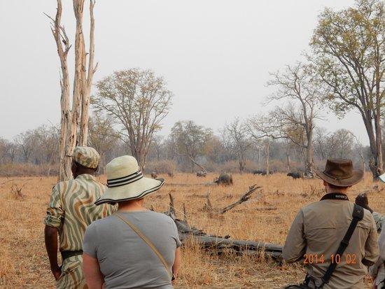 Chikoko Trails Camps: animal watching