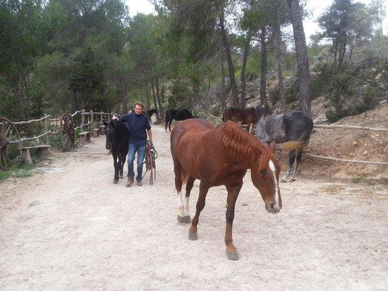 De paarden krijgen ontbijt fotograf a de el valle de los - El valle de los caballos ...