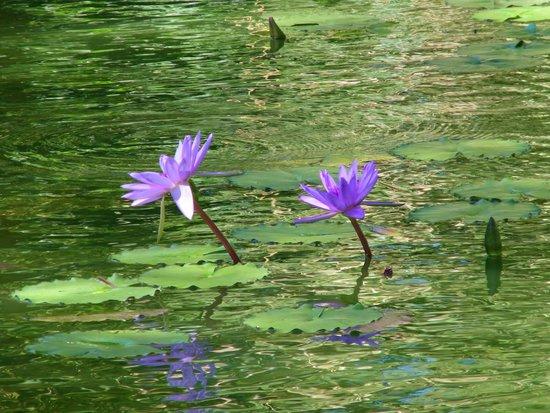 Orchidee Picture Of Jardin Botanique De Deshaies Deshaies Tripadvisor