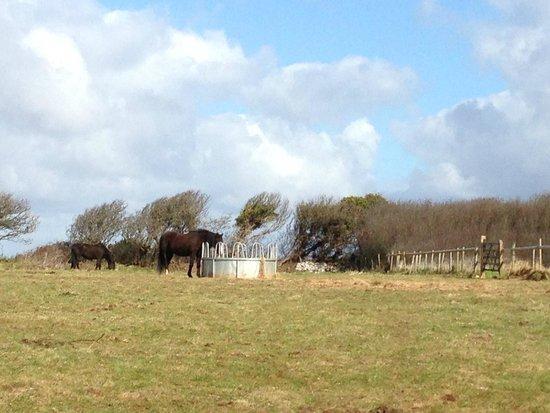 Pennard Castle: 馬も歩く