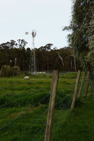 Burnside Organic Farm: View from rear of cottage to paddock