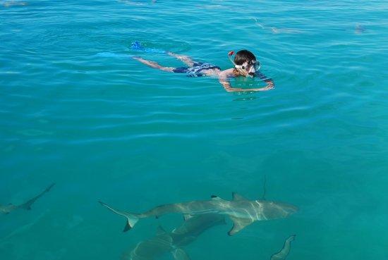 Bagno con gli squali fotograf a de le lagon bleu avatoru tripadvisor - Bagno con gli squali sudafrica ...