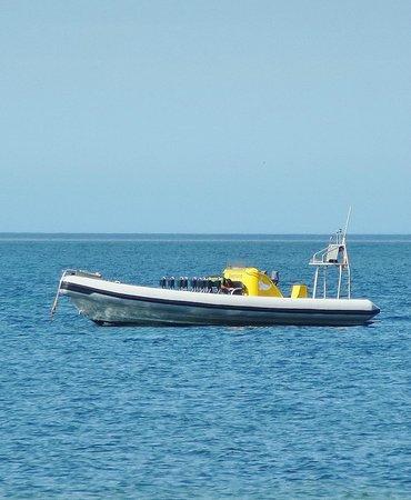 Kangaroo Island Marine Adventures : le bateau