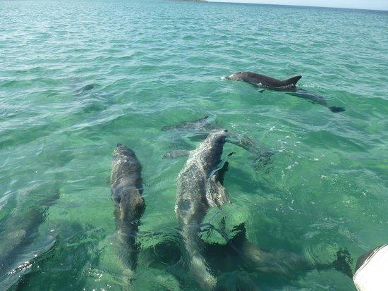 Kangaroo Island Marine Adventures : à nos pieds