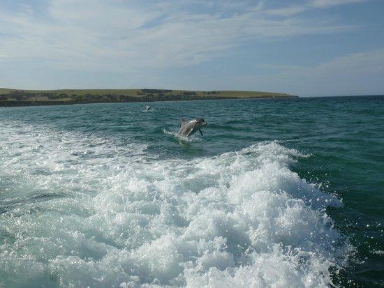 Kangaroo Island Marine Adventures: dans le sillage
