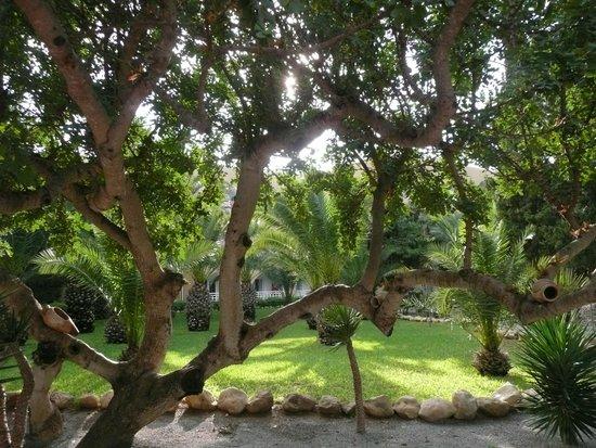Mediterranee Thalasso Golf: Un des caroubiers du jardin