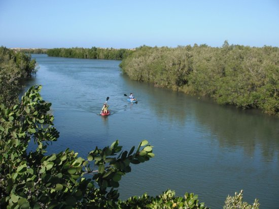 Kayak through the mangrove's inner channels! (2 1-person