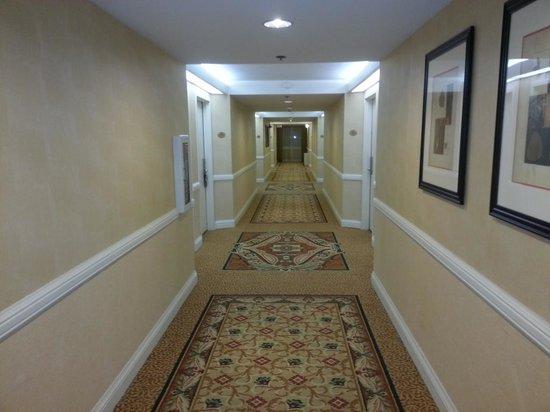 Crowne Plaza Hotel Madison: Corridor - floor 4