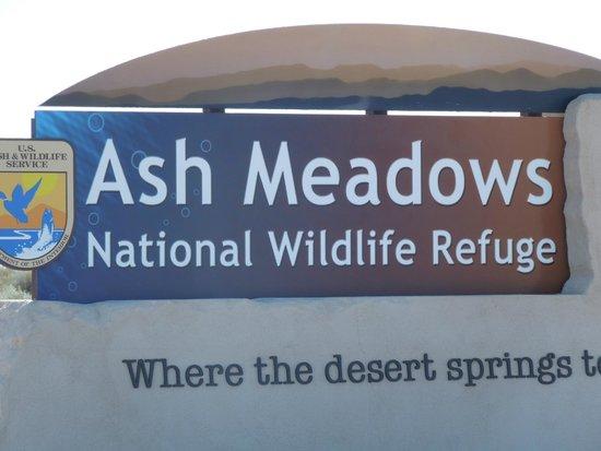 Ash Meadows National Wildlife Refuge: Greetings