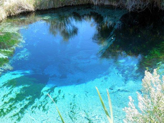 Ash Meadows National Wildlife Refuge: Spring Head