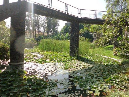 Jard n acuatico picture of jardin aquatico puerto de la for Jardin acuatico