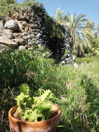 Jardin acuatico bild fr n jardin aquatico puerto de la for Jardin acuatico