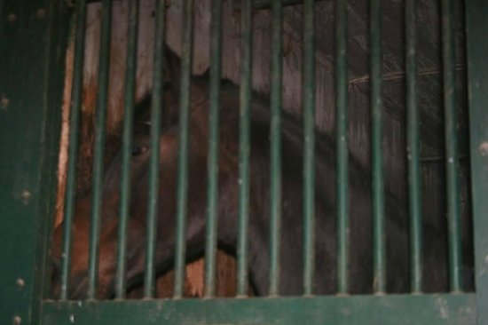 UVM Morgan Horse Farm: Another sad horse with no light or contact with others