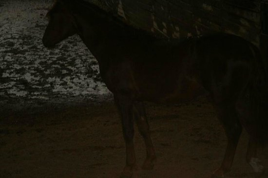 UVM Morgan Horse Farm: Very dark, dirty and dingy stables