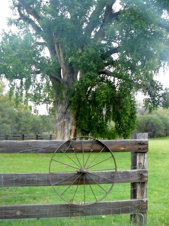 Spirit Tree Inn Bed and Breakfast : The Spirit Tree