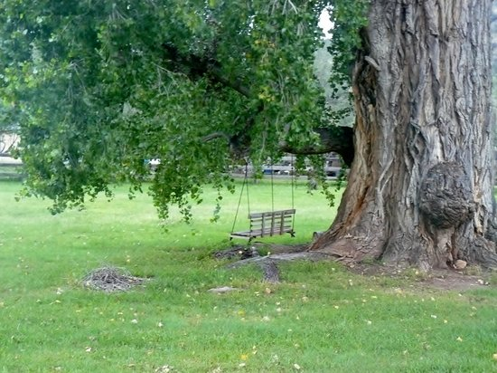 Spirit Tree Inn Bed and Breakfast : Swing beneath Spirit Tree canopy