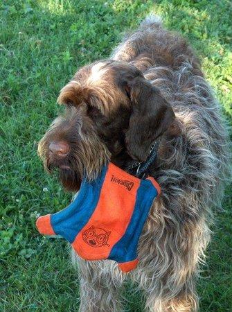 Travelodge Ottawa East: Pet Friendly