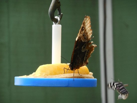 York's Wild Kingdom Zoo and Fun Park: Butterfly
