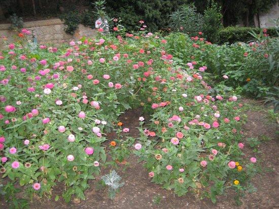 Kichkine: растения в парке