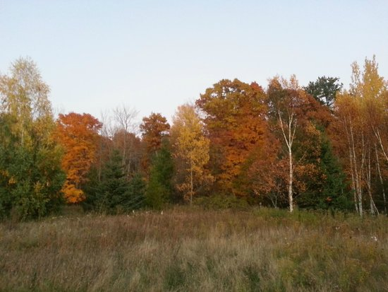 Chanticleer Guest House: A view of the fall colors on the Chanticleer property