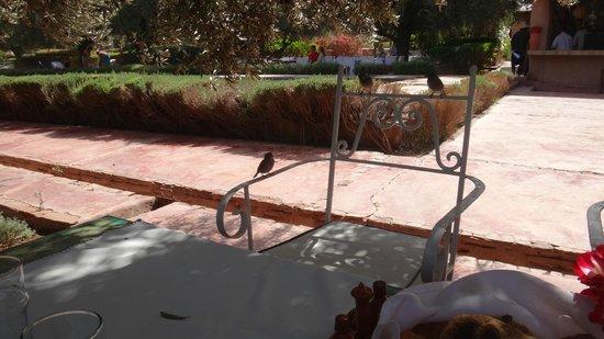 Hotel By Beldi: De la table, vue sur la piscine...et les oiseaux