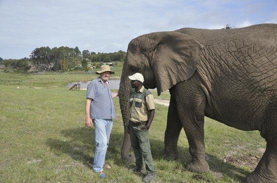 Knysna, Sør-Afrika: Elephant Friends