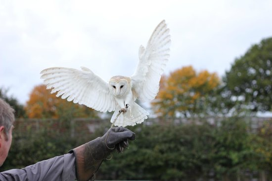 Hawkwise Falconry