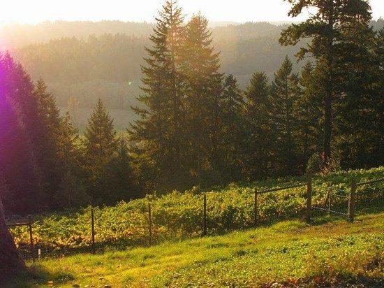 Noble Estate Vineyard & Winery