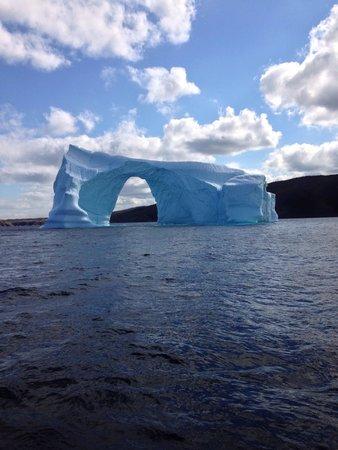 Sheraton Hotel Newfoundland : Iceberg!