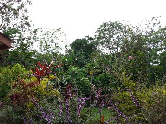 Easter Island Eco Lodge: garden