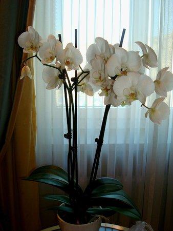 Hotel Schweizerhof Zurich: Орхидеи в каждом номере