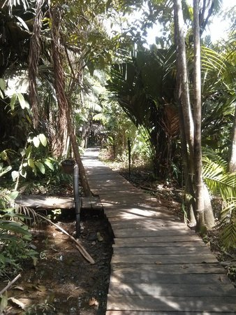 Orinoco Eco Camp: The path through the jungle to the rooms