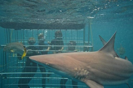 Shark Cage Diving KZN: Shark cage diving