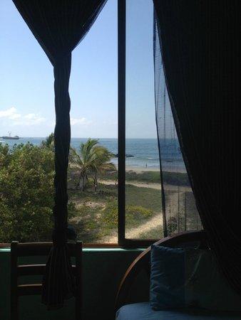 Hostal La Jungla: palms & ocean at amazing price