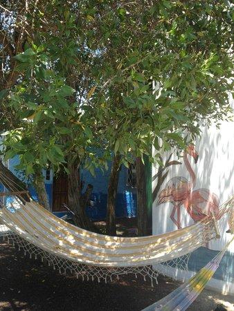 Hostal La Jungla: lovely surroundings
