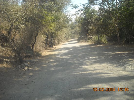 Junagadh, India: Gir forest region