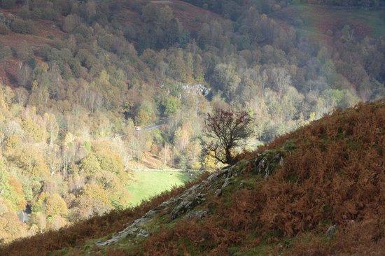 Loughrigg Fell: a lone hawthorn