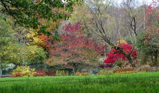 RHS Garden Rosemoor: RHS Rosemoor Lake in Autumn Colour